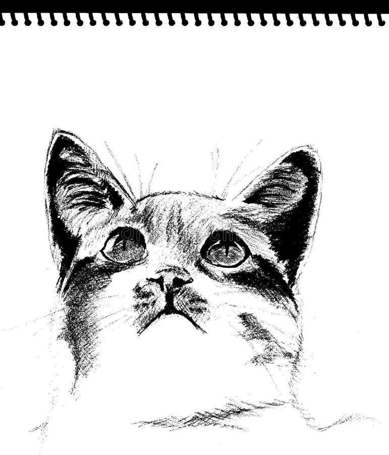 Skizze - Katze stockbilder