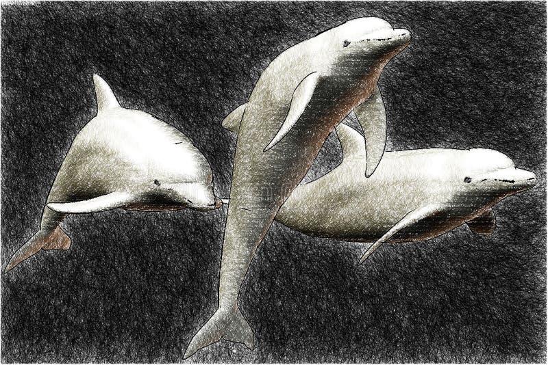 Skizze mit 3 Delphinen lizenzfreie abbildung