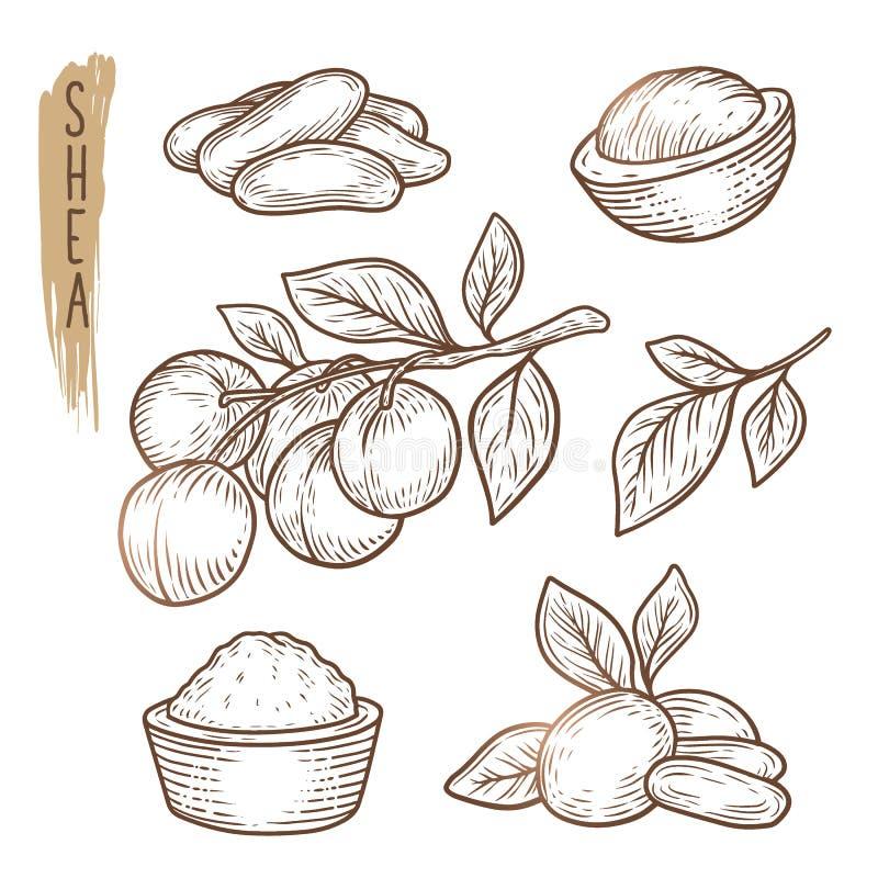 Skizze von Schibaumelementen Vektorsatz Niederlassungen, Blätter, Nüsse und Butterschattenbilder stock abbildung