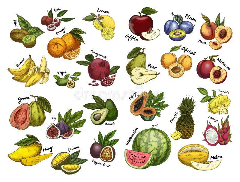 Skizzen des Fruchtlebensmittels Landwirtschaftsthema lizenzfreie abbildung