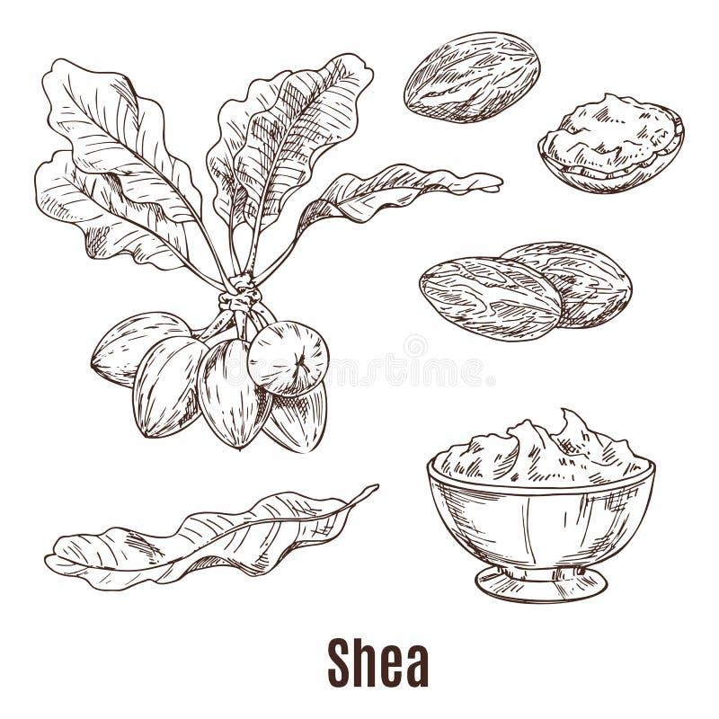 Skizzen von Schibaumnüssen und -butter in der Schüssel oder in der Schale stock abbildung
