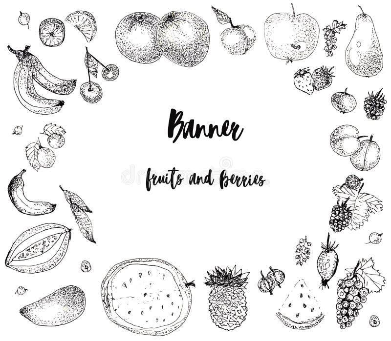 Skizzenfrüchte und Beeren, Fahne vektor abbildung
