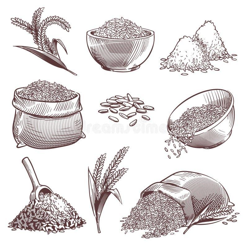Skizzenreis Weinlesehandgezogene asiatische Körner und -ohr Stapel von Wildreisgetreide, Paddysack Landwirtschaftsstich stock abbildung