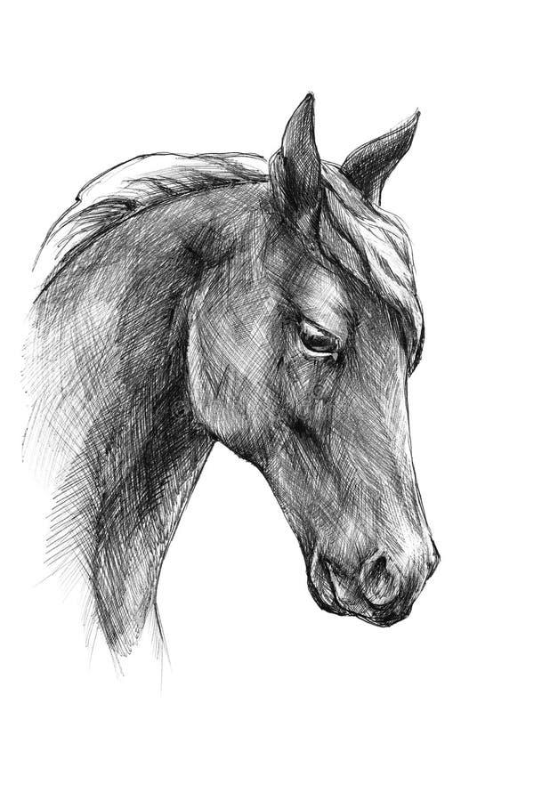 Skizzieren Sie einen Pferdekopf, Schwarzweiss-Zeichnung vektor abbildung