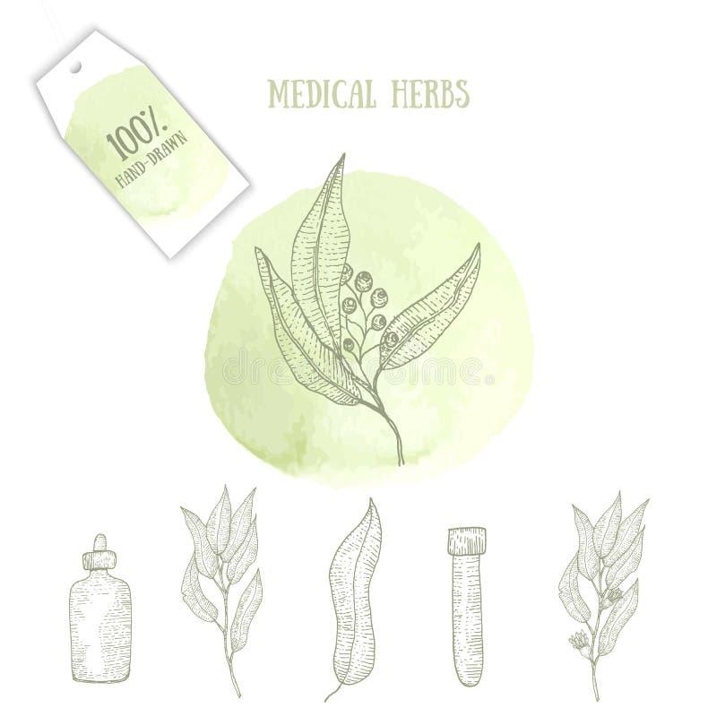 Skizzieren Sie Logo für Botaniker, Klima-, organische Medizin, alternative Heilung mit Kräutern, Flaschen auf grünem Aquarell lizenzfreie abbildung