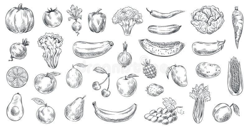 Skizziertes Gemüse und Früchte Handgezogenes biologisches Lebensmittel, Gemüse- und Fruchtskizzenvektor-Illustrationssatz gravier lizenzfreie abbildung