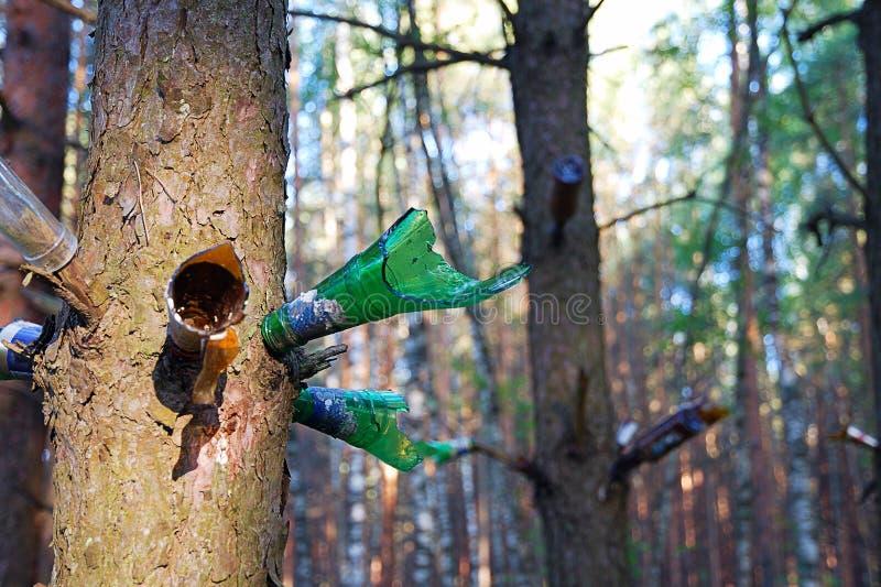 Skjuta flaskor i skog arkivfoto