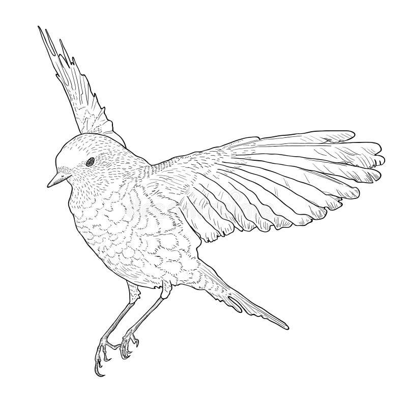 Skjuta i höjden fågeln med spridningvingar tecknad handvektor stock illustrationer