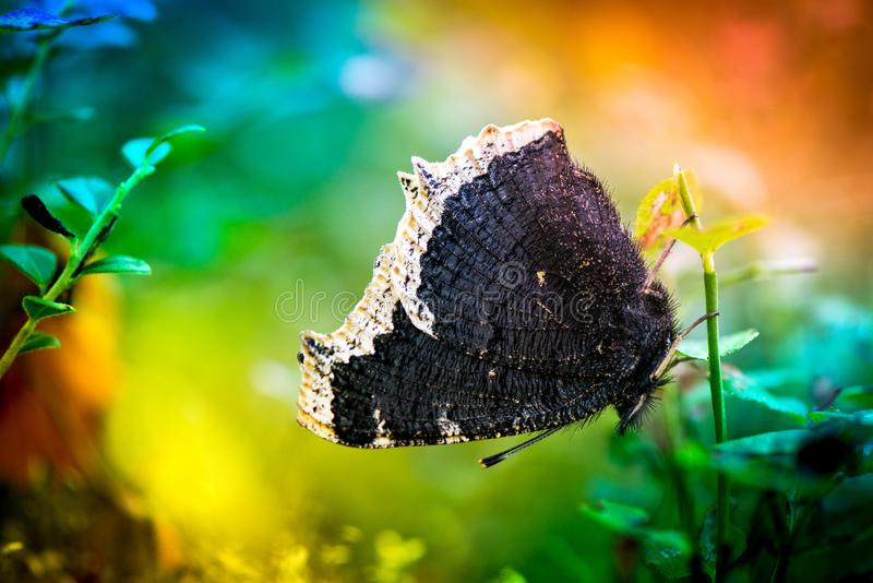 skjuten fjärilsmakro arkivfoto