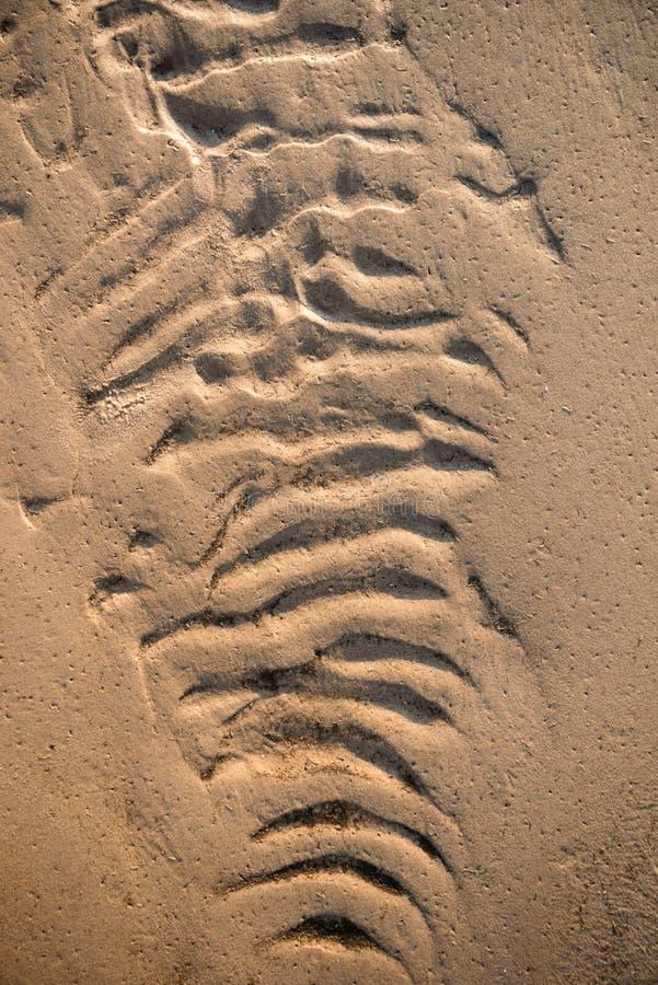skjuten textur f?r bakgrundsstrand sand arkivbilder