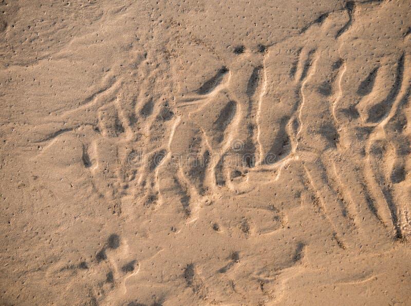 skjuten textur f?r bakgrundsstrand sand royaltyfri fotografi