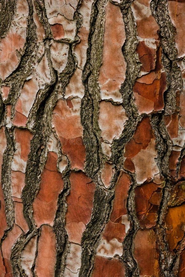 skjuten tree för skäll close upp Nationella botaniska trädgårdar dublin ireland royaltyfria foton
