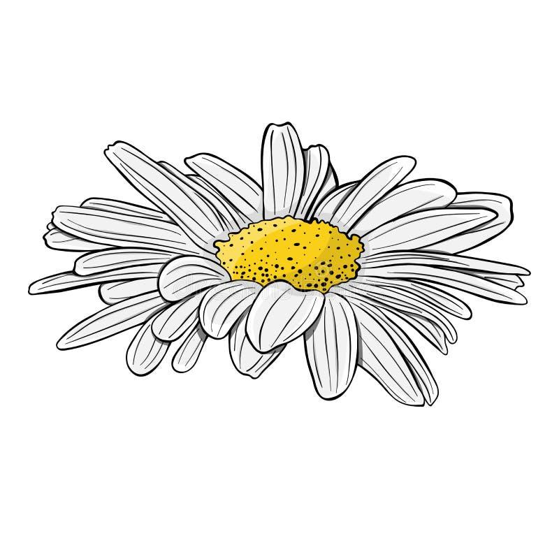 skjutit grunt f?r makro f?r blomma f?r chamomilecloseupdof bakgrund isolerad white Hand tecknad vektorillustration vektor illustrationer