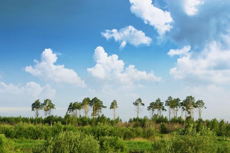 skogängen över sörjer skyen royaltyfria bilder