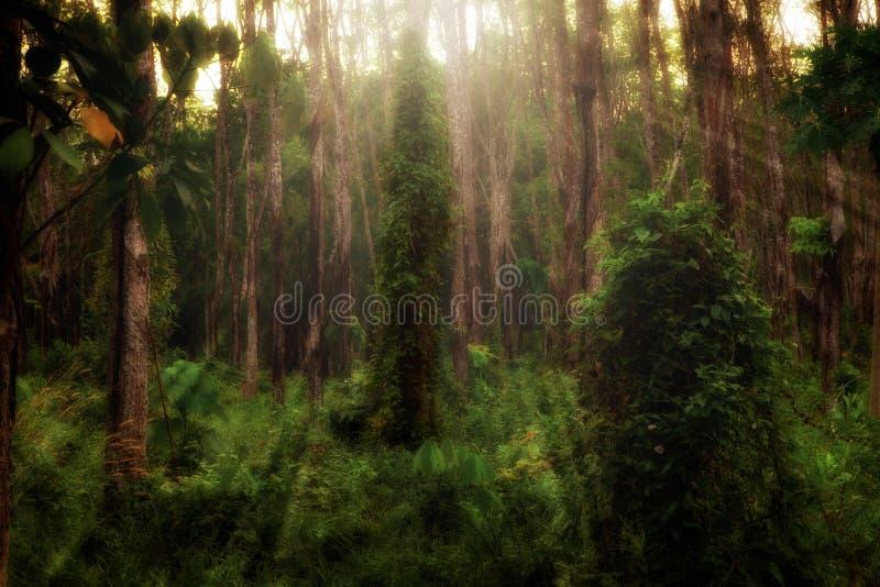 Download Skog arkivfoto. Bild av naturligt, green, idylliskt, lantligt - 19789852