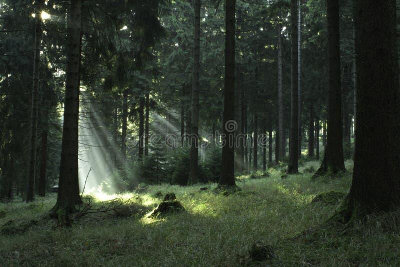 Skog #2 royaltyfria bilder