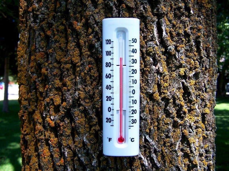 Skog 2 för global värme arkivbild