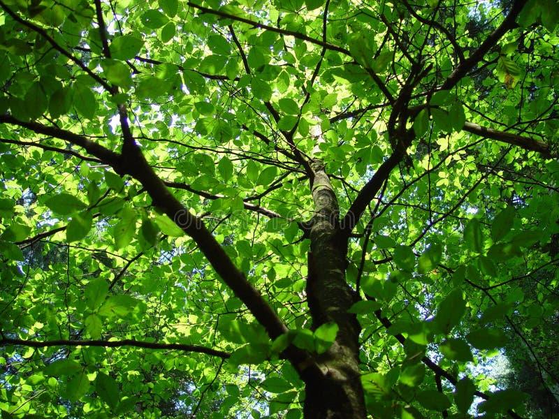 Download Skog 2 går arkivfoto. Bild av trees, växter, skugga, switzerland - 39748