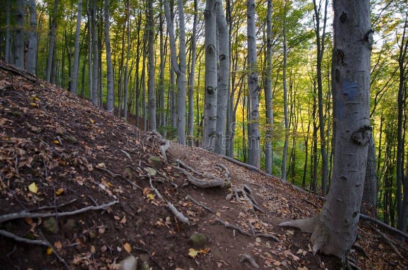 Download Skog arkivfoto. Bild av liggande, stillsamt, vandringsled - 27285374