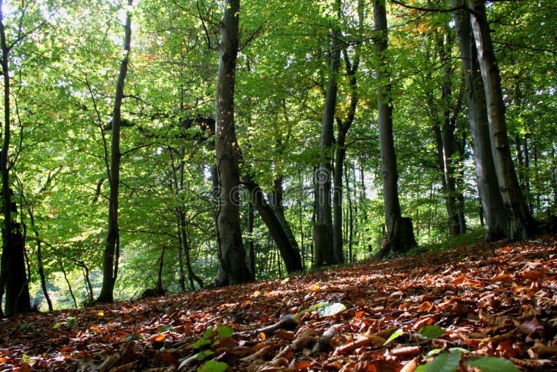 Download Skog arkivfoto. Bild av relax, green, tree, berg, trä, jordning - 275138
