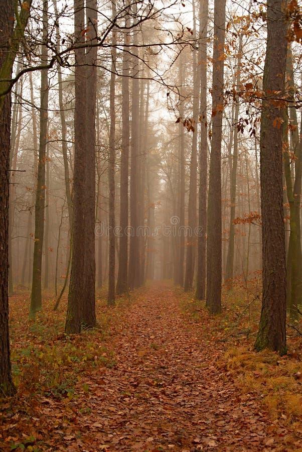skog 3 arkivbild