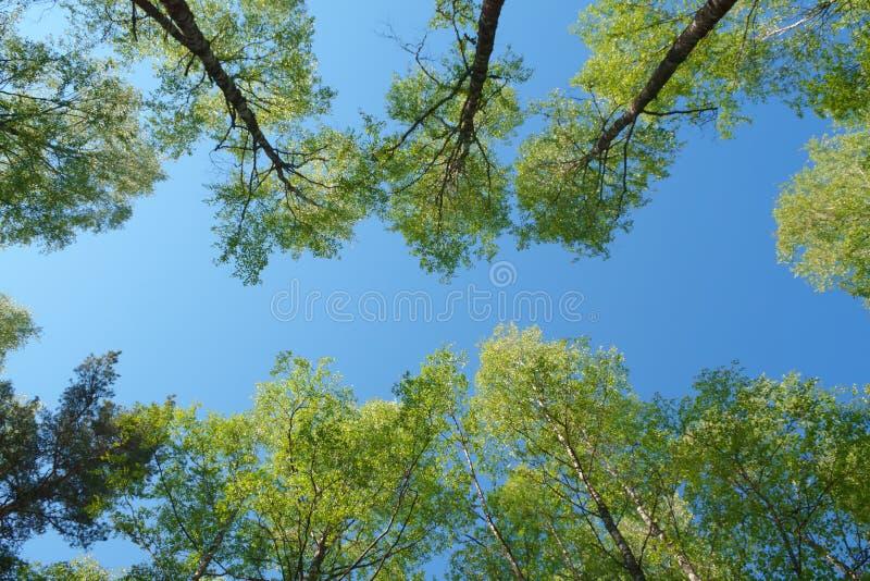Download Skog fotografering för bildbyråer. Bild av horisontal - 37347337