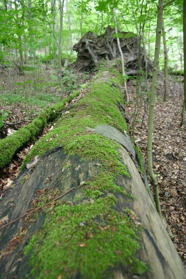 Download Skog arkivfoto. Bild av liggande, green, djungel, stam - 505034