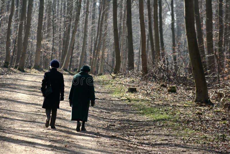 Download Skog fotografering för bildbyråer. Bild av kallt, säsong - 995407
