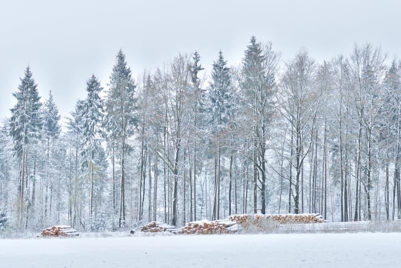Skog av prydliga träd som täckas i insnöad vår arkivbilder
