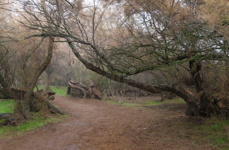 Skog av tarayes royaltyfria bilder