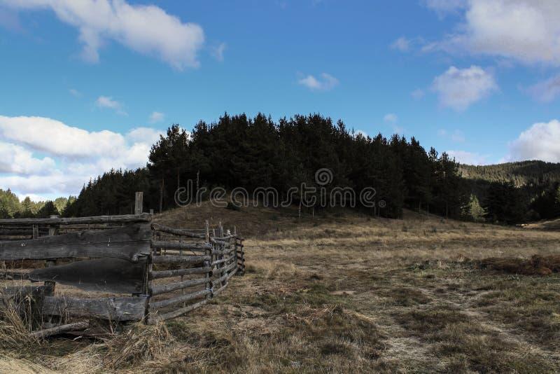 skog bg royaltyfri fotografi