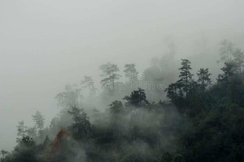 Skog efter regn royaltyfri fotografi