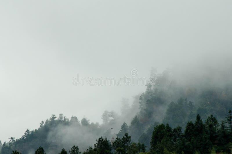 Skog efter regn royaltyfria foton
