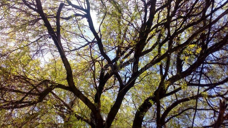 Skog för ögonblick för trädgräsplanstycke royaltyfri bild