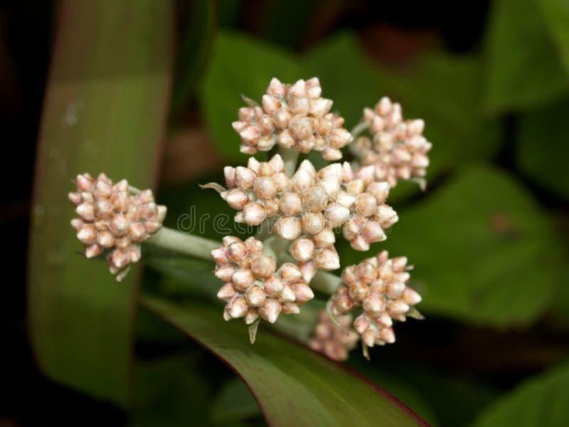 skog för 14 blomma royaltyfri bild