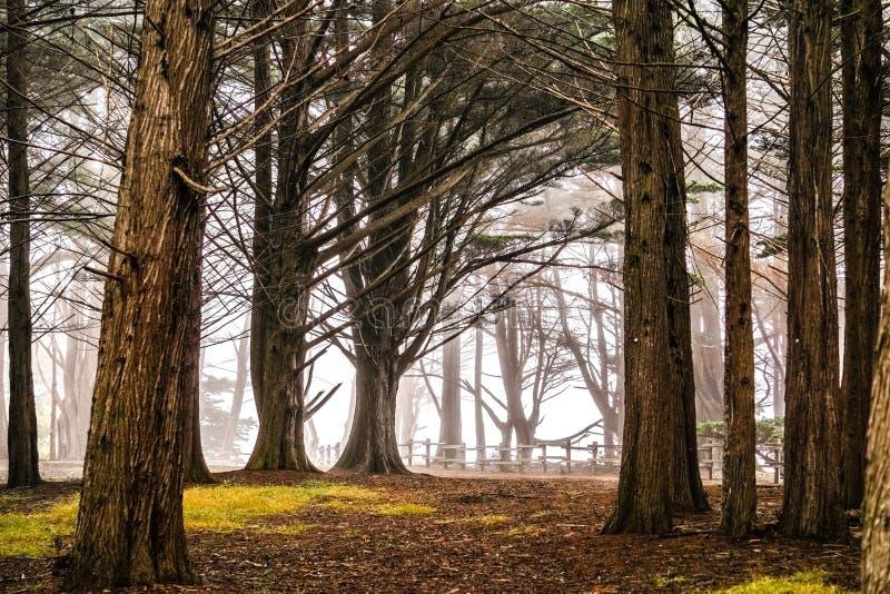 Skog för cypressträd nära Moss Beach, Kalifornien royaltyfri bild
