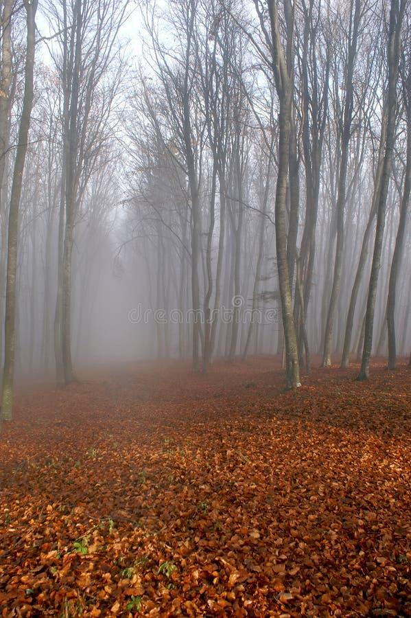 skog för dimma 2 arkivbild