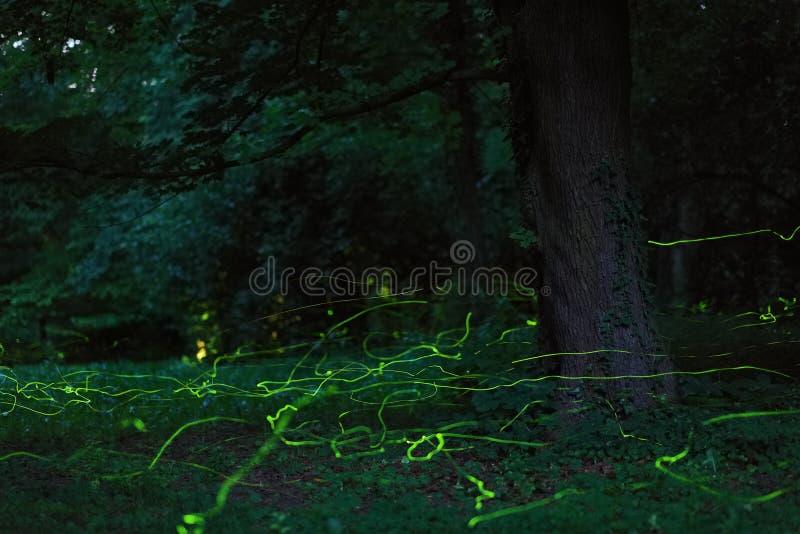 Skog för natt för sagaplatseldflugor royaltyfri fotografi