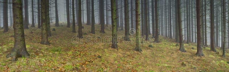 Skog för panoramavårgran arkivfoto