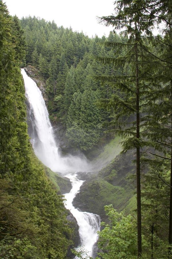 Skog för vattennedgångvattenfall royaltyfri fotografi
