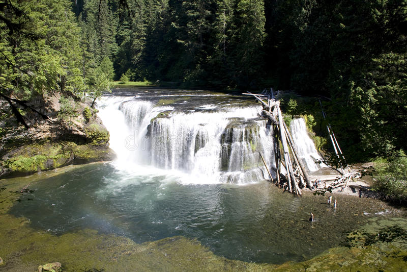Skog för vit för vatten för vattenfallnedgångvattenfall fotografering för bildbyråer