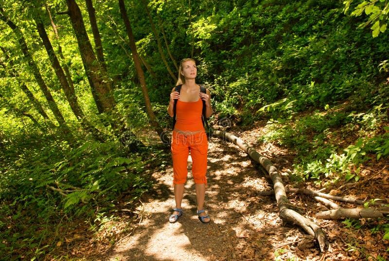 skog förlorad turist arkivbild