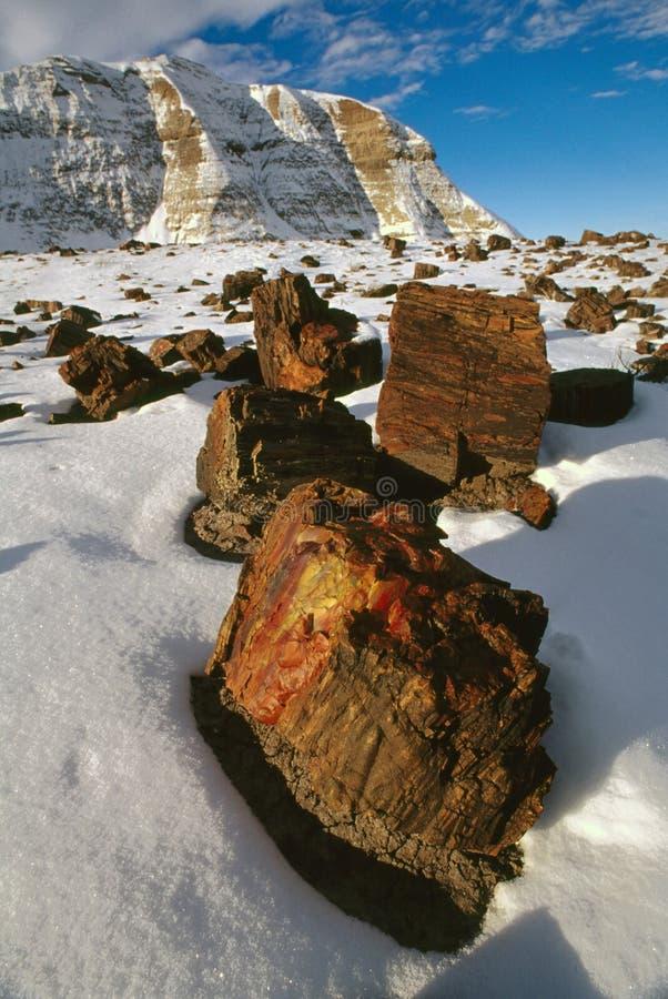 skog förstenas vinter royaltyfria foton
