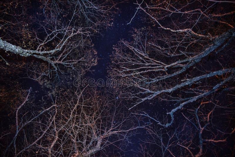Skog, hemtrevlig brand och blåttnatthimmel arkivfoto