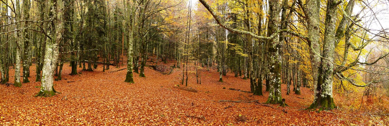 Skog i autumm fotografering för bildbyråer
