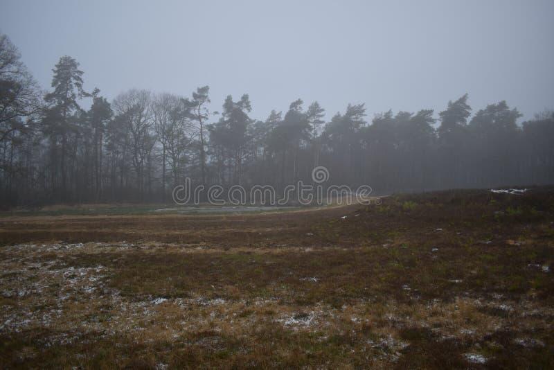 Skog i avståndet med vinterhimmel arkivbild