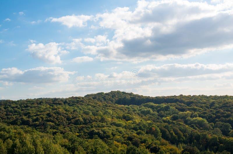 Skog i början av hösten royaltyfri fotografi