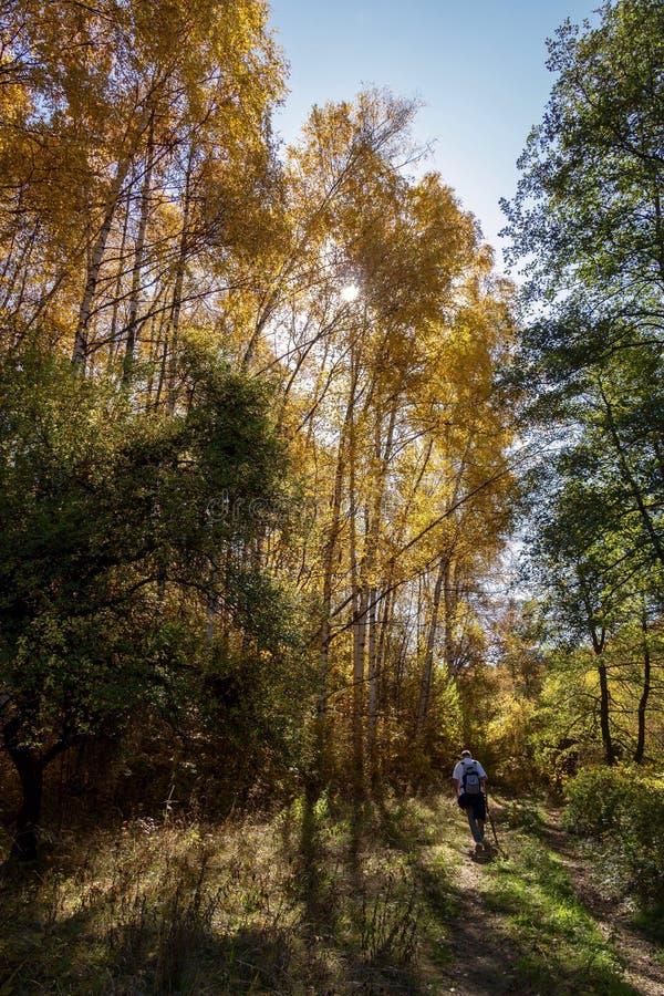 Skog i berget royaltyfri bild