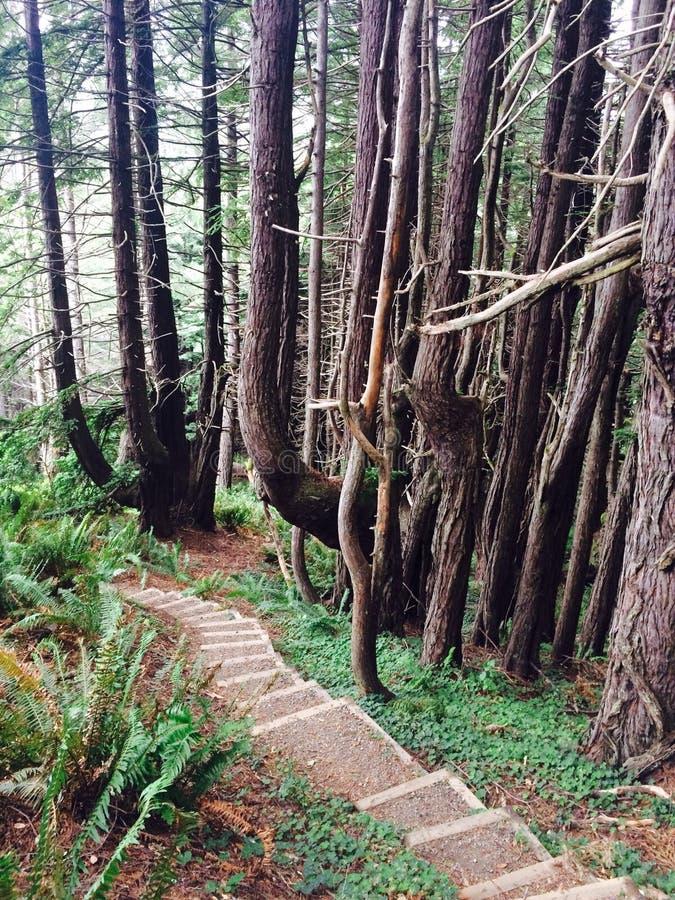skog i den övreKalifornien kusten royaltyfri bild