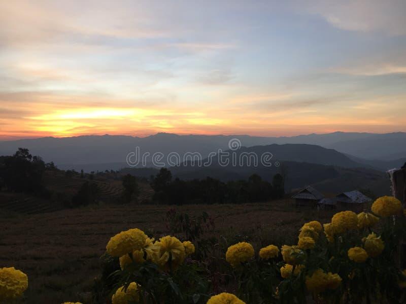 Skog i den norr solnedgången för Thailand nuturegräsplan @ royaltyfria foton